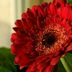 Flores para decoração: Fotos