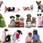 Roupas para Cachorros: Fotos