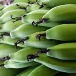 Farinha de Banana verde emagrece? Saiba como fazer