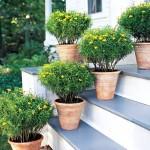 decoracao-de-jardim-com-vasos-8