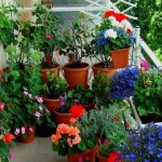 Jardins em Espaço Pequeno: Fotos e Dicas para Decorar
