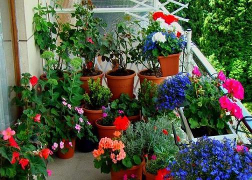Jardins em Espaço Pequeno