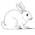 desenhos-de-coelho-para-imprimir-e-colorir-4