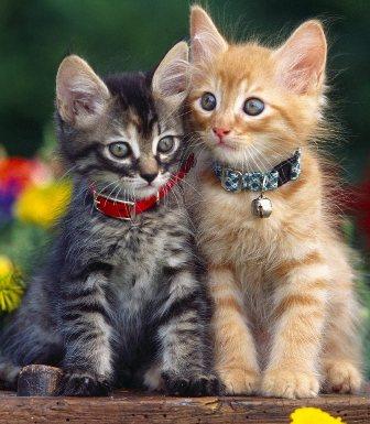 dicas-de-nomes-para-gato-de-estimacao