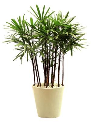 Plantas para Dentro da Casa