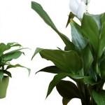 Modelos de Plantas para Ambientes Internos