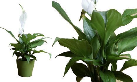 modelos-de-plantas-para-ambientes-internos