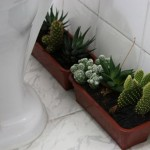 Jardim Dentro de Banheiro: Como Fazer, Modelos