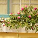 Jardim na Janela: Fotos, Modelos