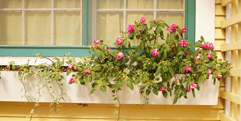 jardim-na-janela-6