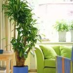Plantas para Ambientes Fechados: Fotos, Dicas para Decorar