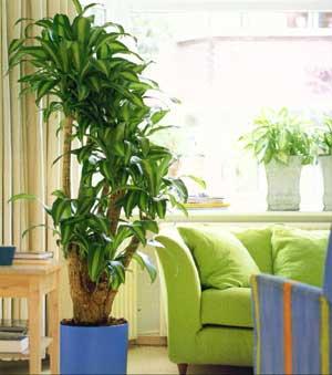 plantas-para-ambientes-fechados-2