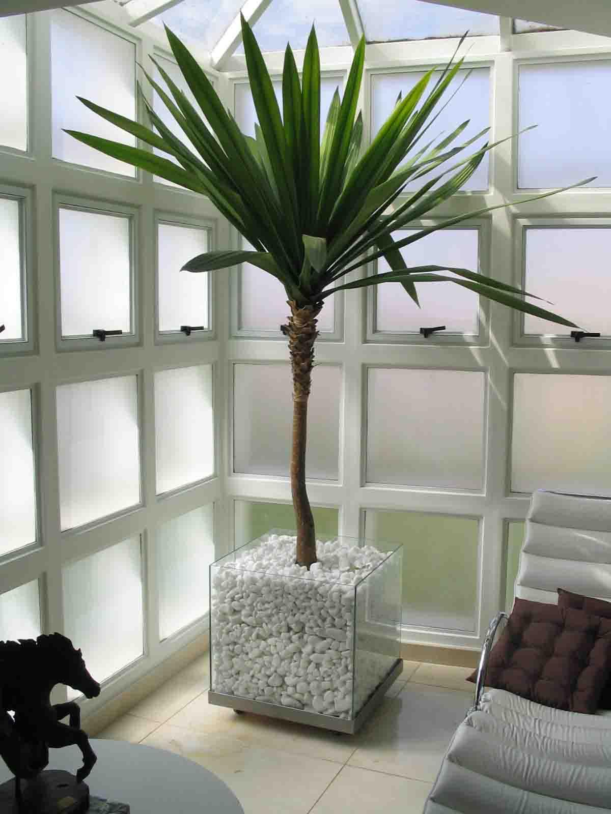 Plantas para ambientes fechados fotos dicas para decorar for Decorar online