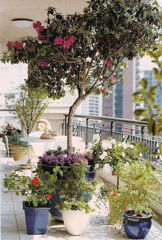 mini jardim na varanda de apartamento