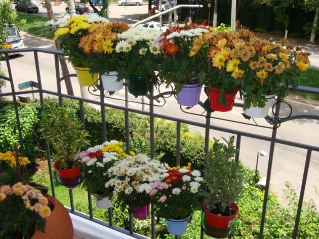 Decoração de Jardim Pequeno Externo – Fotos, Dicas para Decorar