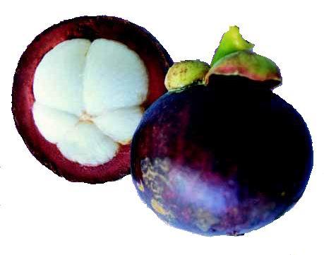 Mangostão Emagrece: benefícios, como tomar