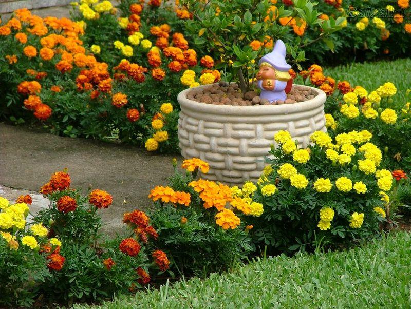 baratos no quintal de casa para que você possa analisar com mais