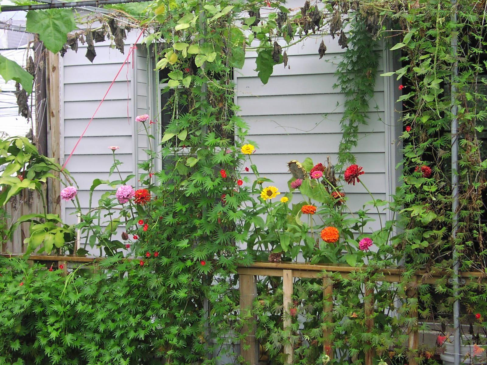 Jardim Simples No Quintal Jardim Simples E Bonito Quarto Simples E ...