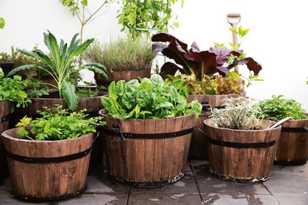 Como Fazer uma Horta em Casa ? Passo a Passo, Fotos